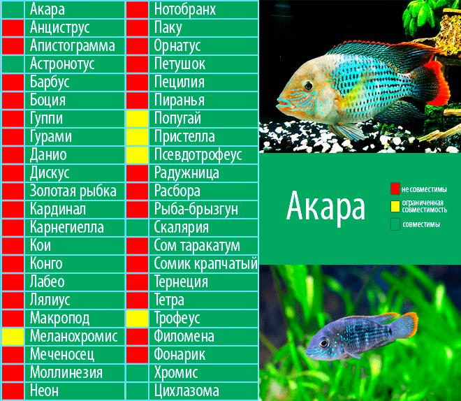 Неприхотливые аквариумные рыбки для начинающих: виды для маленького аквариума, самые простые в содержании и уходе