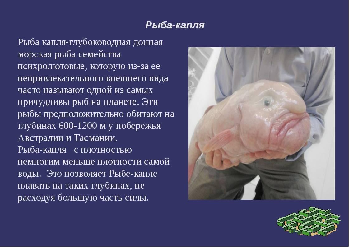 Саворин рыба. описание, особенности, образ жизни и среда обитания | животный мир