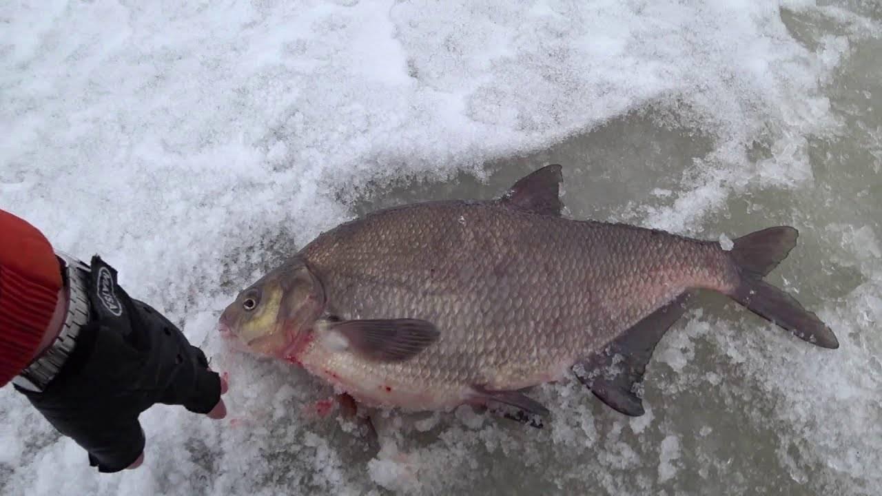 Зимняя рыбалка: топ методов ловли и где искать трофей