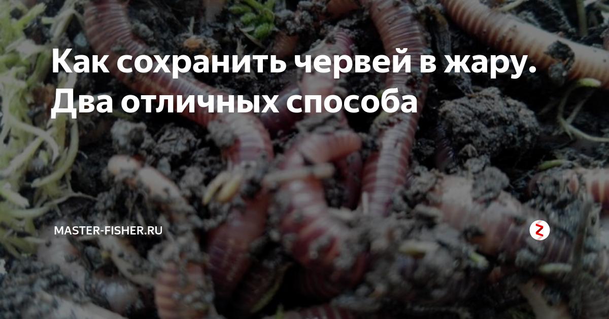 Как хранить червей для рыбалки дома, чем их кормить и как выращивать