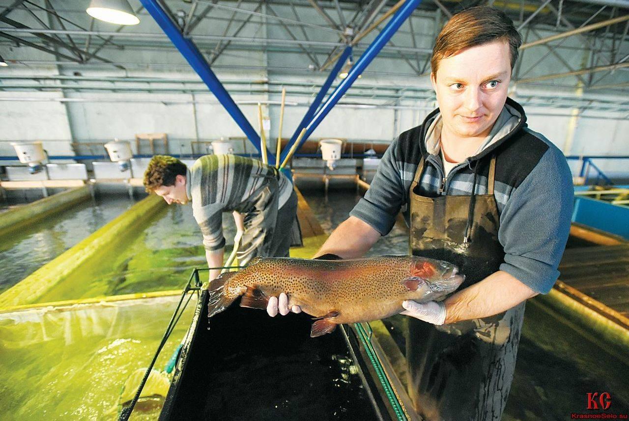 Рыбоводство как бизнес-идея. Организуем пруд для разведения рыбы