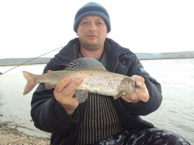 Ловля на балду в открытой воде хариуса, окуня и другой рыбы