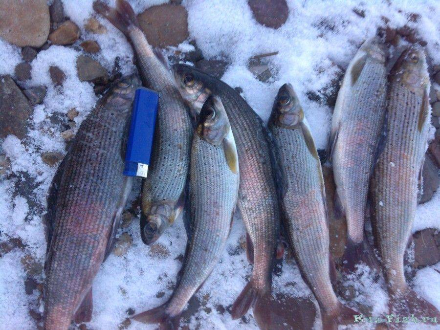 Рыбалка в кемеровской области 2020