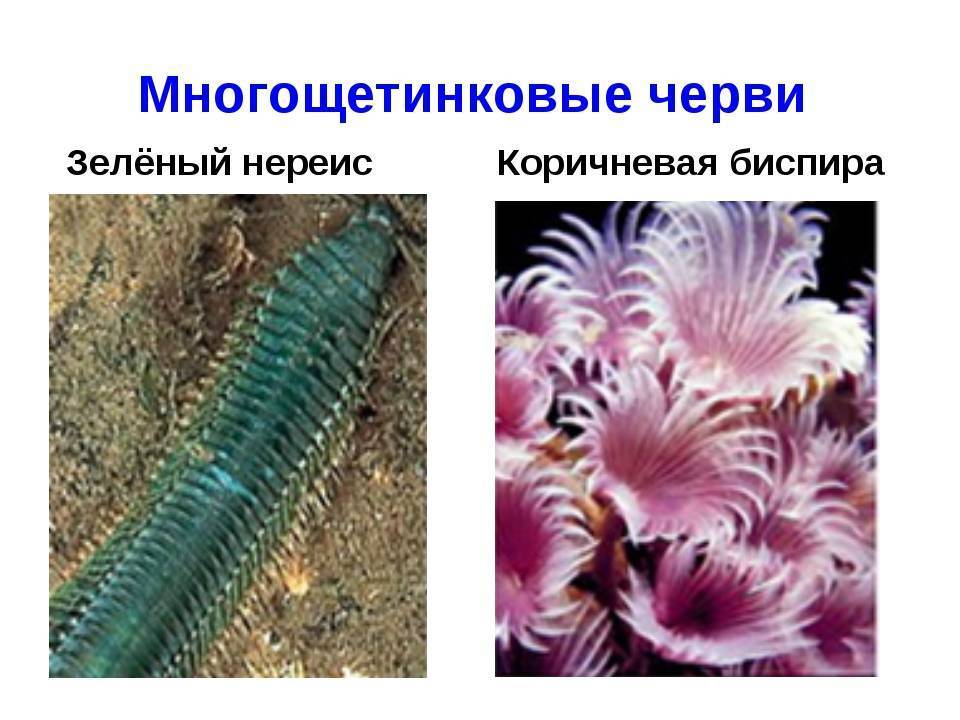 Что такое и стоит ли опасаться нематод в аквариуме