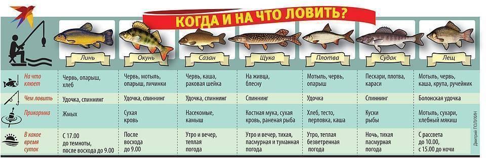 Какая рыба водится в дону: фото с названиями, выбор снастей и приманок