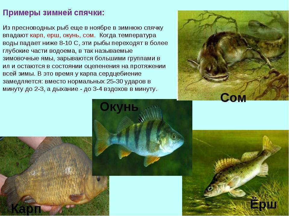 Спящая ледышка: куда зимой исчезают лягушки? - зима - info.sibnet.ru