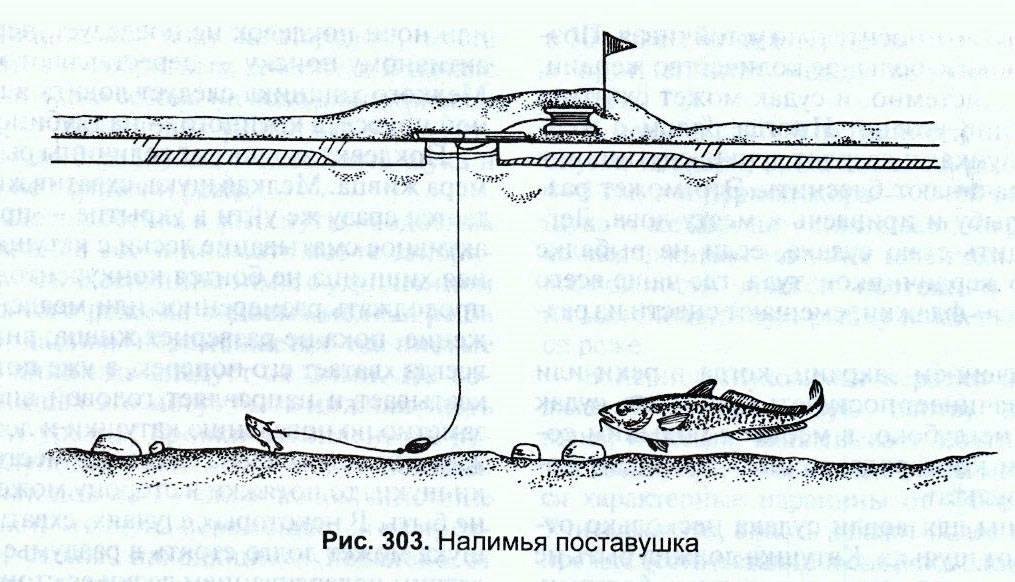 Как ловить налима: снасть, наживка и техника
