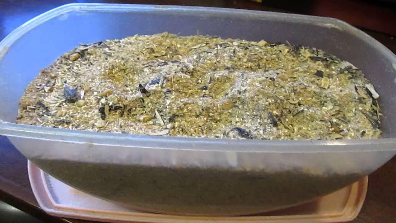 Прикормка для плотвы: составы, рецепты и способы приготовления