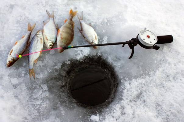 Снасти для зимней рыбалки какие есть снасти и что брать с собой на зимнюю рыбалку новичку. советы по выбору снастей
